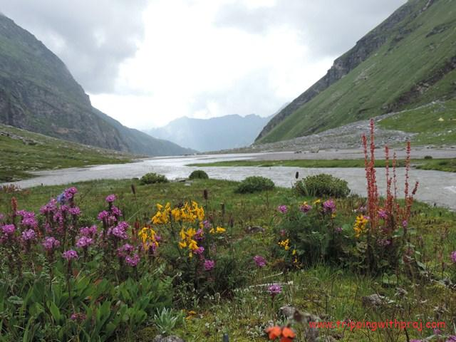 Varied colours of Himalayan Flowers