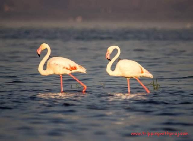 Bhigwan Bird Watching - Here we go - Left Right Left