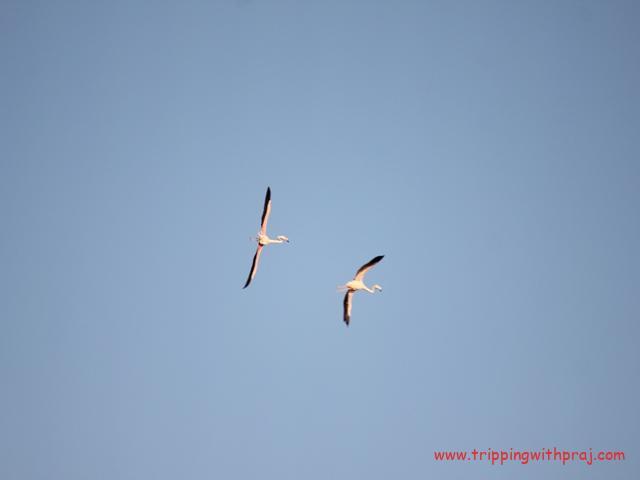 Bhigwan Bird Watching - Set off on a long journey