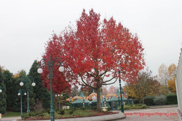 Vibrant Fall colours in Paris