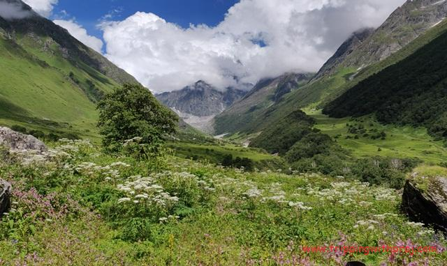 Enthralling View of the Valley of Flowers